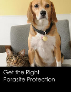 198201408-get-parasite-protection