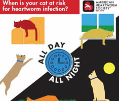 0000005-24-Hour-Risk-Graphic-cat