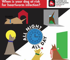 0000005-24-Hour-Risk-Graphic-dog