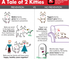 0009-A Tale of 2 Kitties