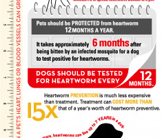 Protect Your Pet Infographic 2018