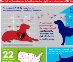 heartworm-risk-infographic