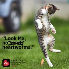 01-10-LookMa.Cat