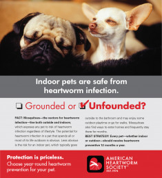 10-Indoor-pets-are-safe