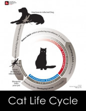 lifecycle-solo-for-cat