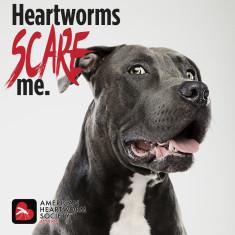 2021-poster-HWScareMe.DOG_14APR21