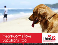 Heartworm-Love-Vacations-1