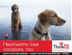 Heartworm-Love-Vacations-2
