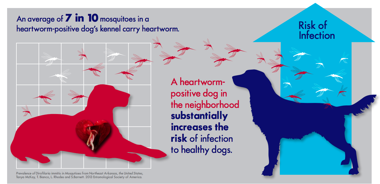 Heartworm Infographics