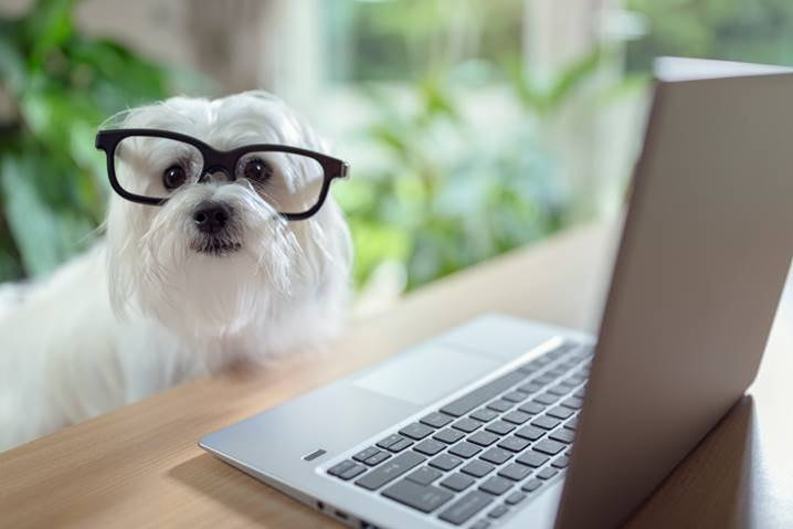 White dog wearing glasses by laptop