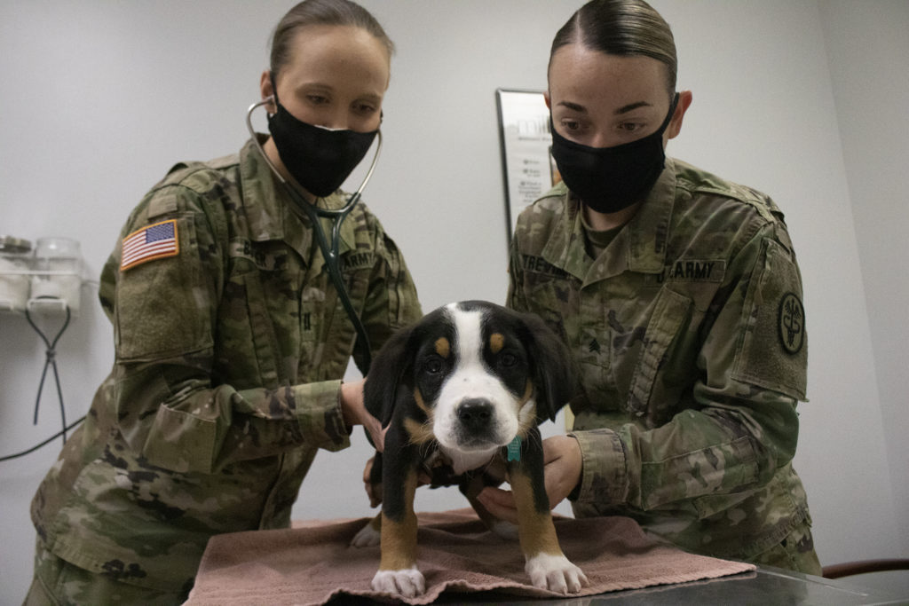 Capt. Ashley Butler (left) and Sgt. Hope Cruse Trevino of the Veterinary Treatment Facility perform a wellness exam on Heidi, a Swiss Mountain Dog puppy. VTF staff perform heartworm disease tests on dogs during annual visits like this. Even still, VTF staff said prevention is more valuable than treatment. Photo by Sam Campbell.