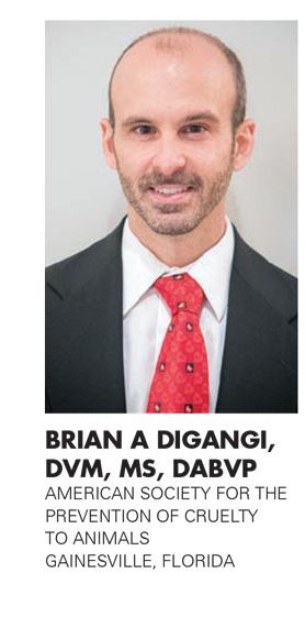 BRIAN A DIGANGI, DVM, MS, DABVP