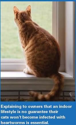 cats ahsspeaks